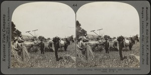 Cutting wheat with reaper and binder, Pennsylvania