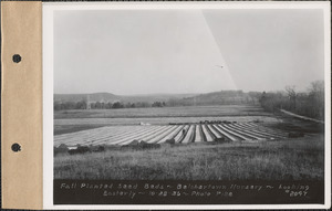 Belchertown Nursery, fall planted seed beds, looking easterly, Belchertown, Mass., Oct. 28, 1936