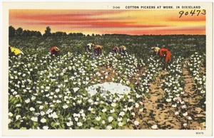 D-540. Cotton pickers at work, in Dixieland