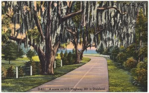 D-831. A scene on U.S. Highway 301 in Dixieland.