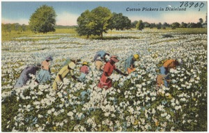 Cotton pickers in Dixieland