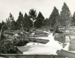 Snow covered, fallen trees
