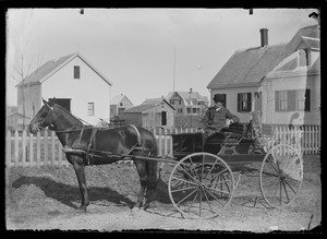 Unidentified man and dog in horse-drawn carriage, Hingham Centre