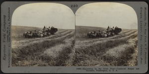 Harvesting in the west, combined reaper and thresher, Washington