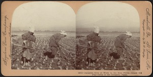 Japanese Girls at Work in the Rice Fields - Grand Old Fuji-Yama in the Distance, Japan