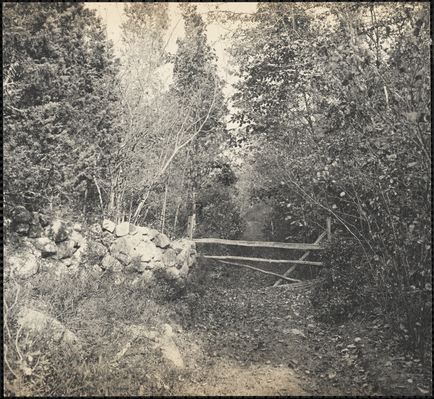 Historic photograph: Woodland path, Sharon, MA