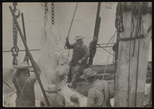 Whaleman processing whale