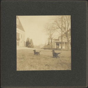 Ashdale Farm. Two dogs in yard.