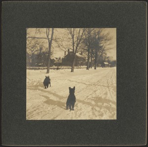 Ashdale Farm. Two dogs (terriers) in snow on Andover Street.