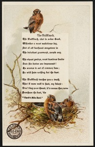 The bullfinch. The bullfinch, clad in sober garb, whistles a most melodious lay, and of all feathered songsters is the daintiest gourmand, people say. Clark's Mile-End 24 Spool Cotton.