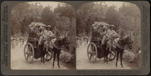 """A hill-country """"Ekka"""" between Cashmere and Murree, India"""