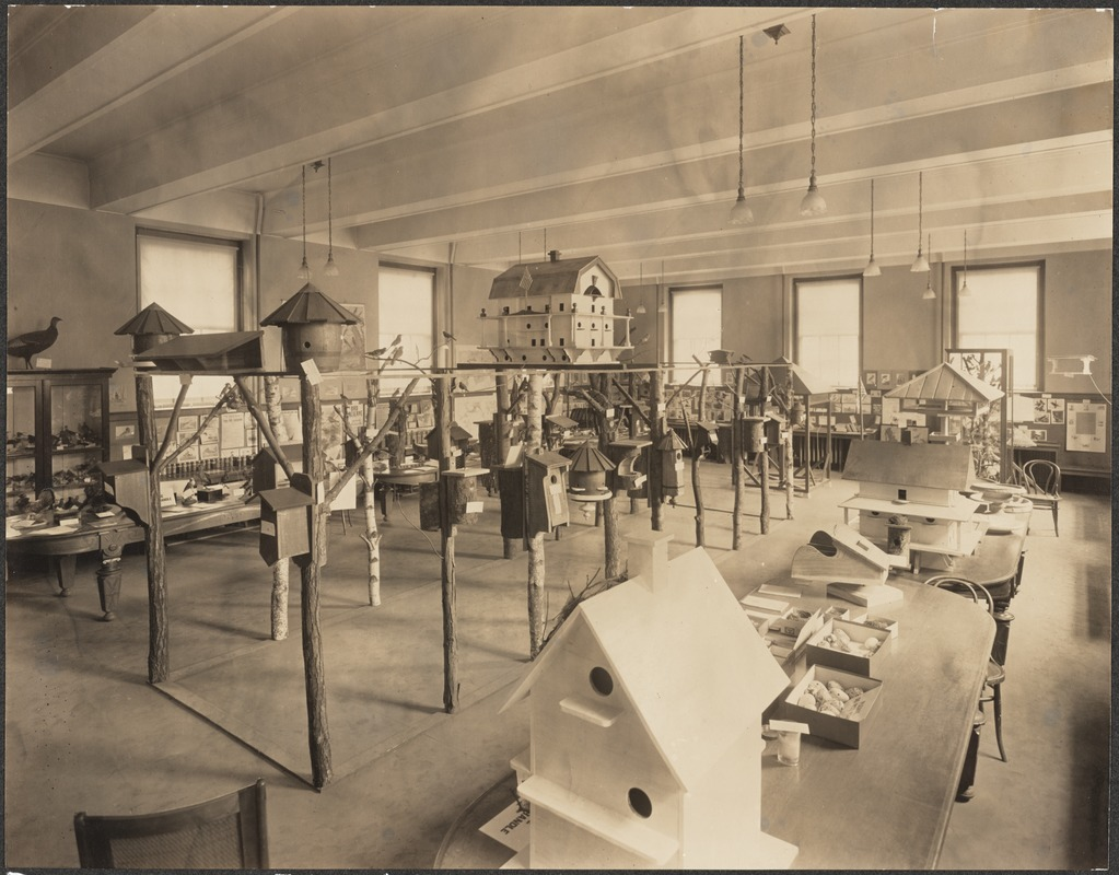 Library activities, 1910 building, Bird Club exhibit