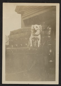 Dog in a vehicle