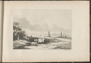Cattle, river side