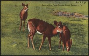 Some of our forest friends, Grand Canyon of Pa.