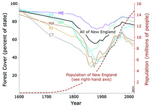 New England Forest Decline and Recovery