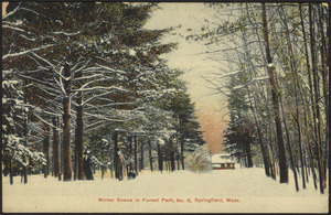Winter scene in Forest Park, No. 6, Springfield, Mass.