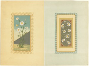 Daisies Used in Designs