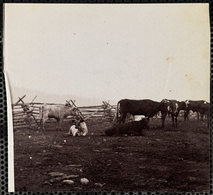 Cattle Corral Near City Point