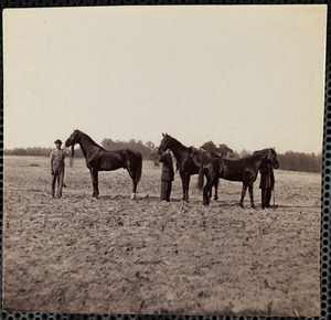 General Grant's horses, Cold Harbor, Virginia