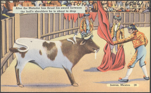 After the matador has thrust his sword between the bull's shoulders he is about to drop, Juarez, Mexico