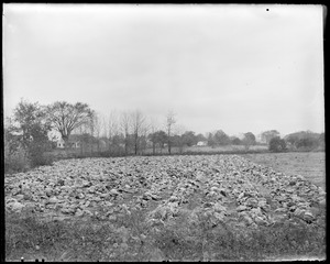 Cabbage field, Kemptons