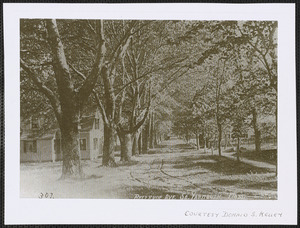 Bellevue Avenue, South Yarmouth, Mass.