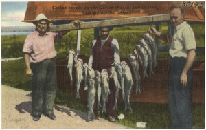 Catfish caught in the outlet works, Sardis Dam, near Batesville, Miss.