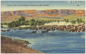 Cattle of the Ole Southwest crossing the Rio Grande