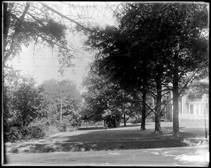 Frederic S. Clark row of pines, south of house