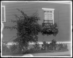 #32 Talbot Avenue, Jos. Brown, window box on side of house, 1st window boxes