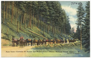 Pack train- contains 64 horses and mules- Coeur d'Alene National Forest, Idaho
