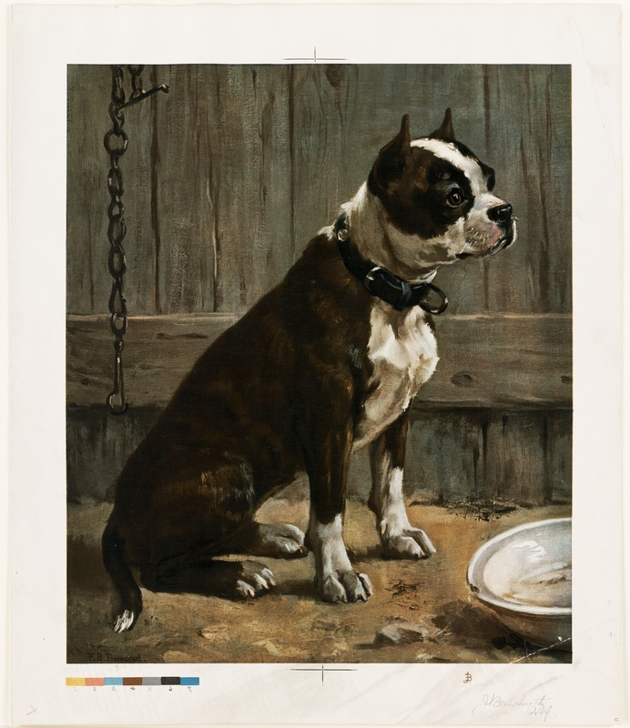 Terrier Seated