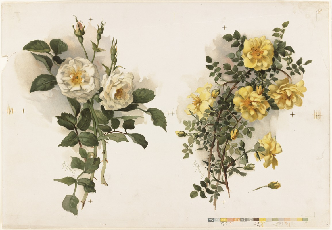 Two Bunches of Yellow Roses