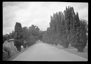 Avenue leading to the grave of George Russell (AE) in Mt. Jerome cemetery, Dublin