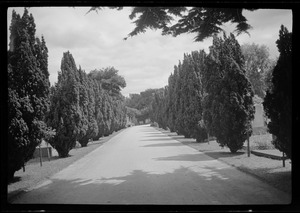 Avenue leading to the grave of George AE Russell in Mt. Jerome cemetery, Dublin