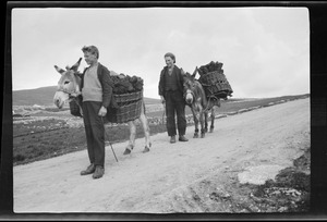 Boys carrying turf on a road in Gortahork, Co. Donegal