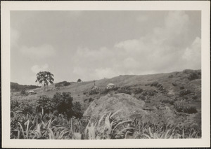 """Bathsheba, Barbados, B. W. I., in these hills dwell the descendants of the """"Cromwell Exiles,"""" exiled from Ireland in 1652-54"""